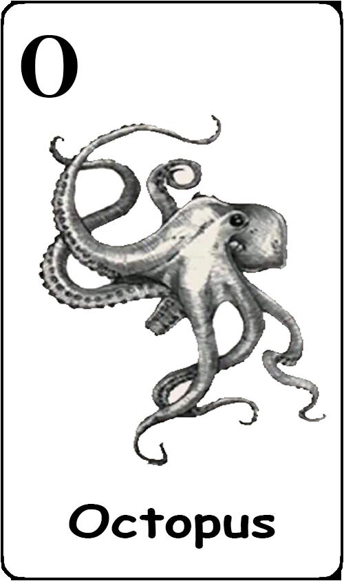 O - octopus