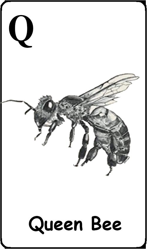 Q - Queen Bee