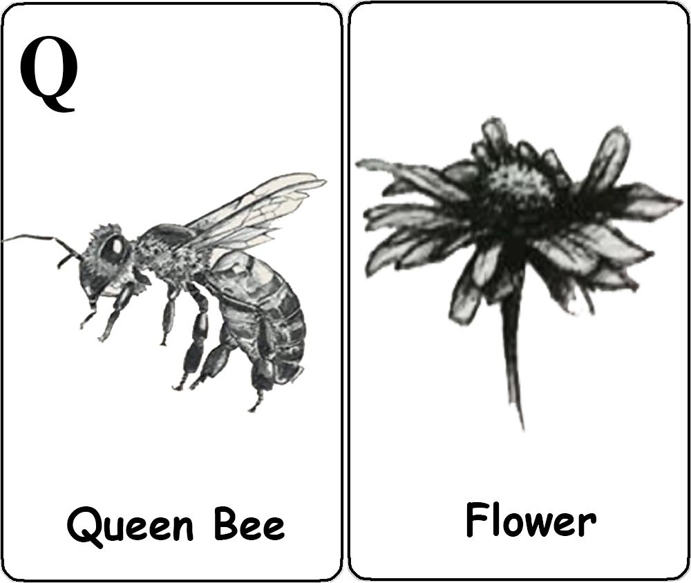 Queen Bee - Flower