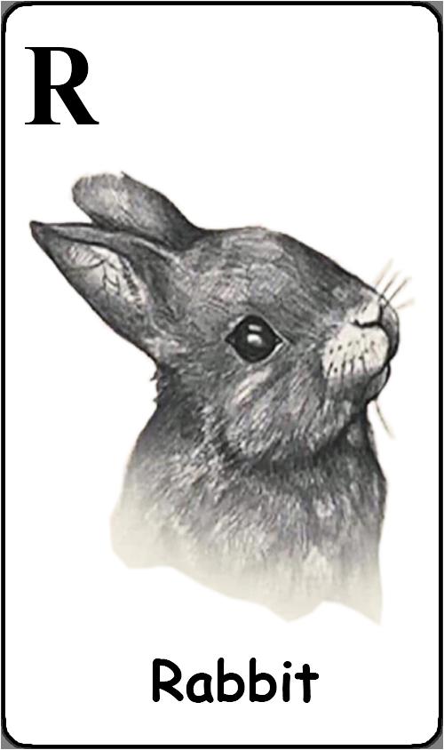 R - Rabbit