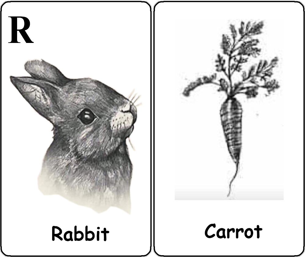 Rabbit - Carrot