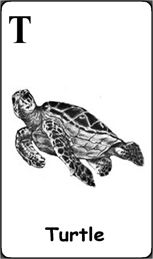 T - Turtle