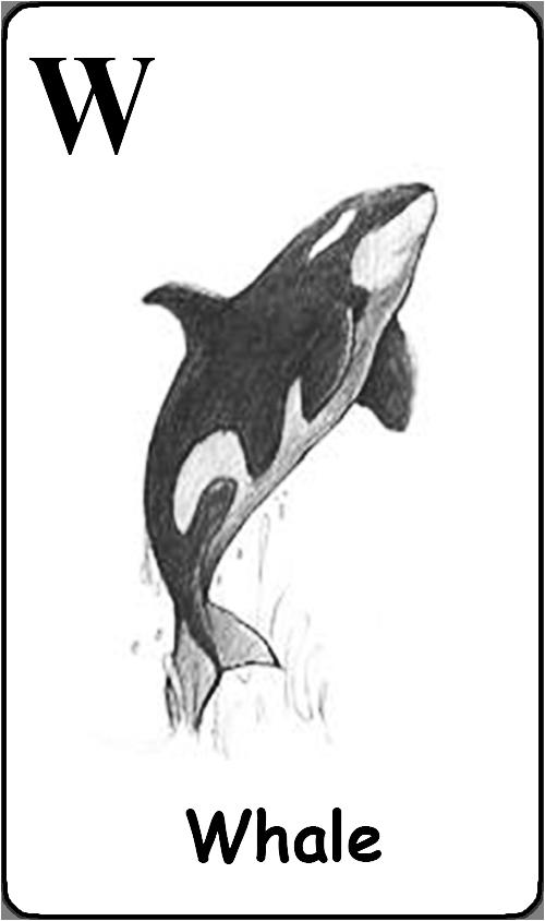 W - Whale
