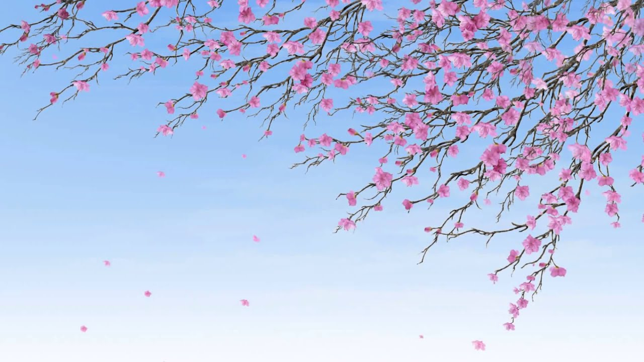 Background hoa anh đào