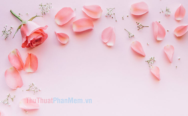 Background hoa hồng đẹp