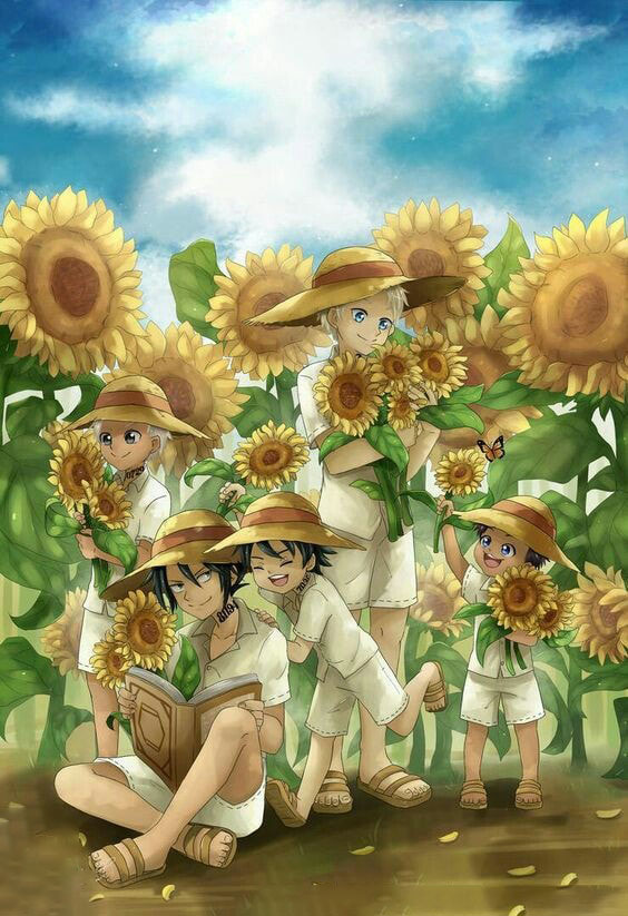 Ảnh anime hoa hướng dương one piece