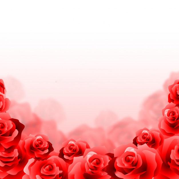 Ảnh background hoa hồng