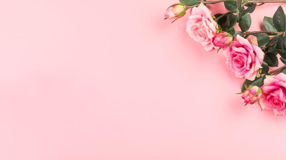 Ảnh background hoa màu hồng