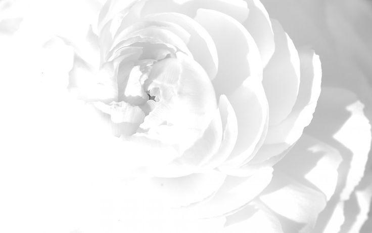Ảnh hoa văn nền trắng