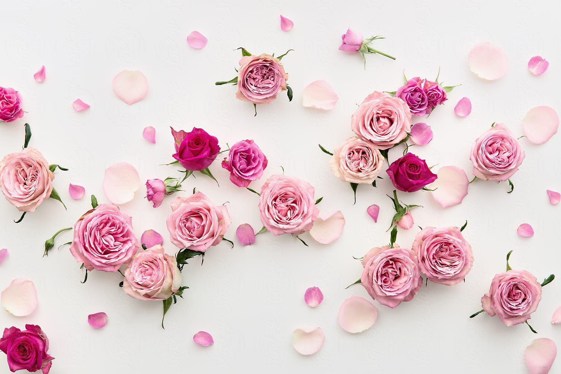 Background bông hoa hồng