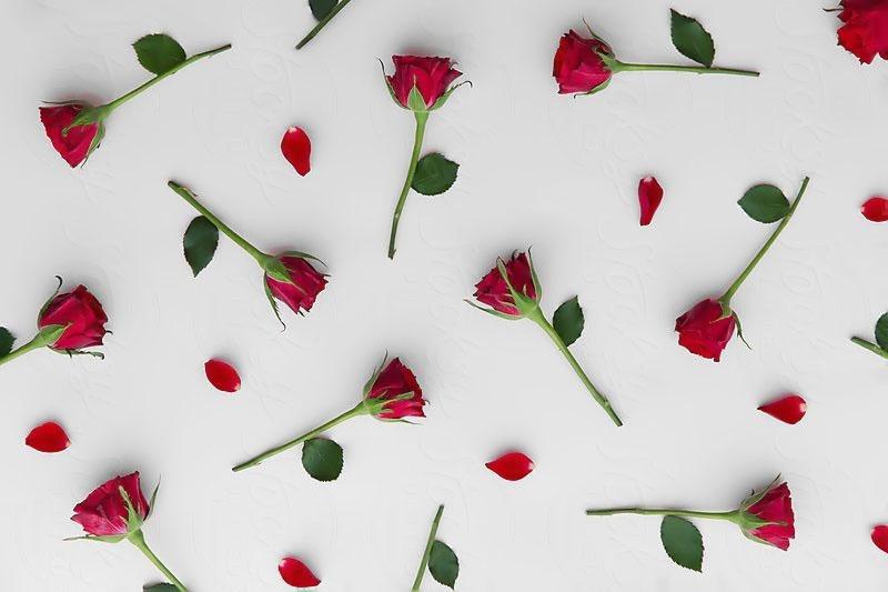 Background cành hoa hồng