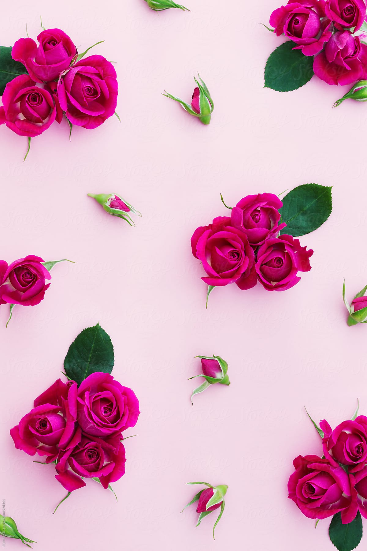 Background đẹp về hoa hồng
