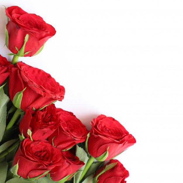 Background đóa hoa hồng