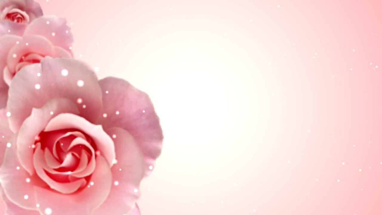 Background hoa hồng 3D