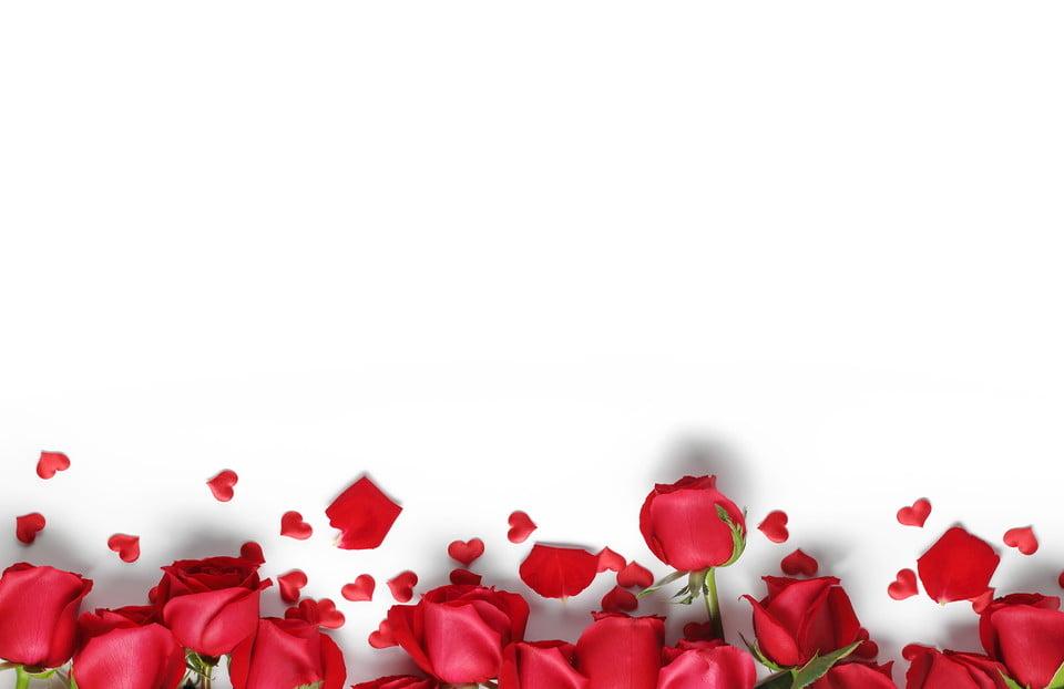 Background hoa hồng đẹp nhất