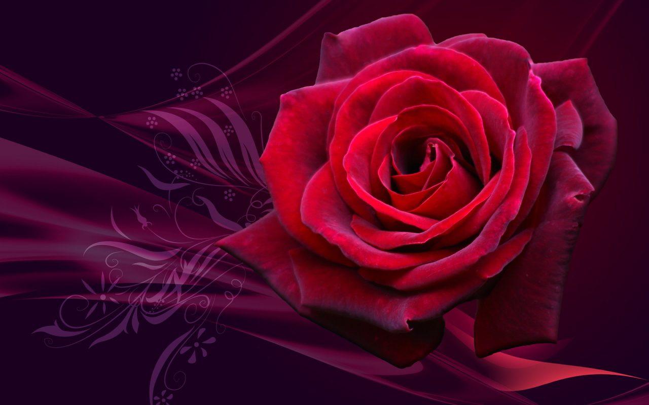 Background hoa hồng lãng mạn