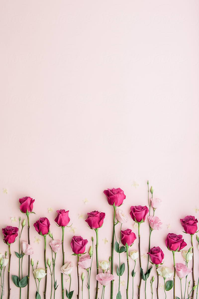 Background nhành hoa hồng