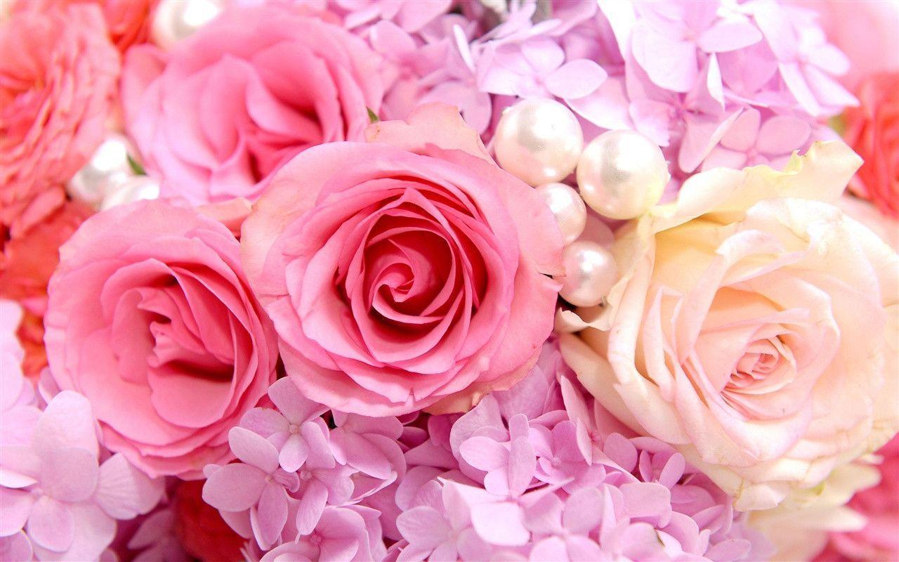 Hình ảnh background bông hoa hồng