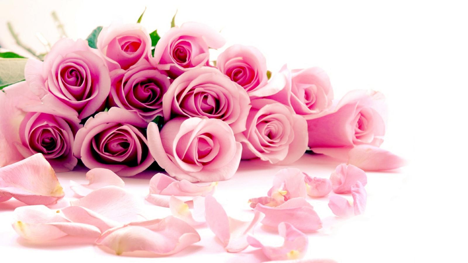 Hình ảnh hoa hồng làm background
