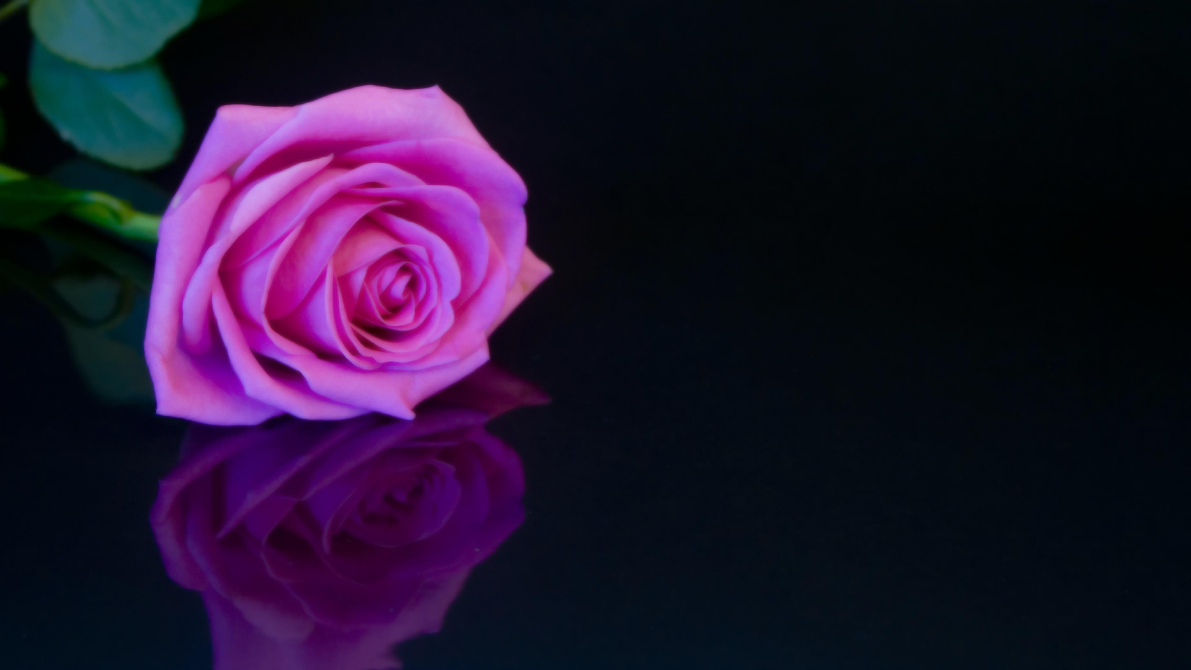 Hình ảnh mẫu background hoa hồng