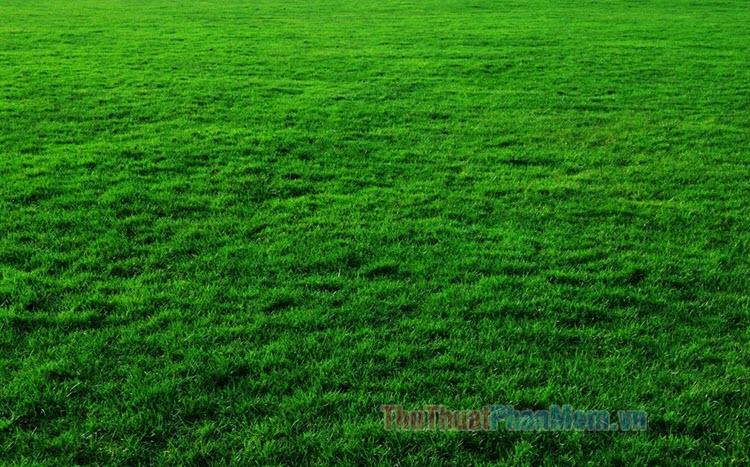 Hình ảnh bãi cỏ xanh đẹp