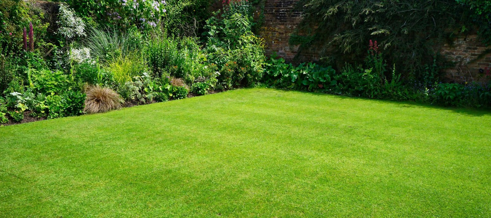Ảnh bãi cỏ xanh đẹp trong vườn