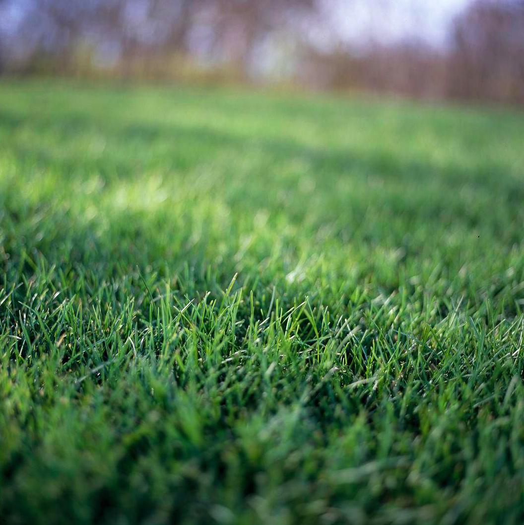 Ảnh bãi cỏ xanh lá đẹp