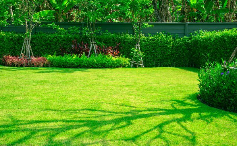 Ảnh bãi cỏ xanh mướt