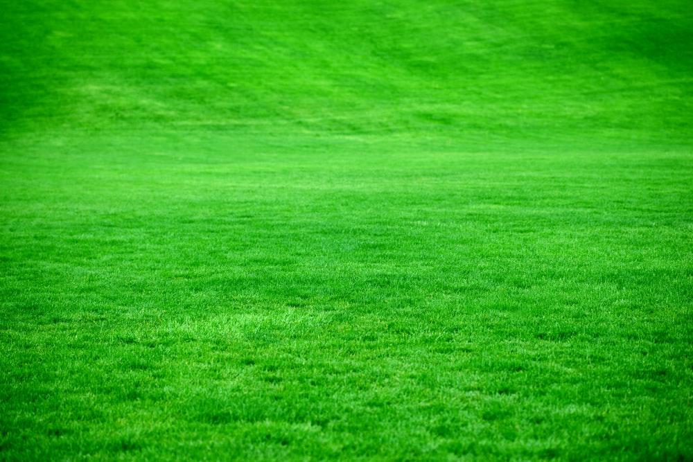 Ảnh bãi cỏ xanh ngát