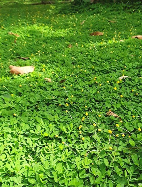 Ảnh đẹp bãi cỏ xanh mướt