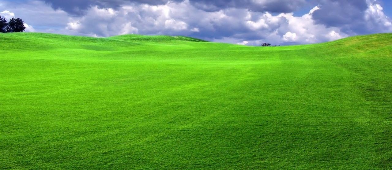Ảnh đẹp về bãi cỏ xanh