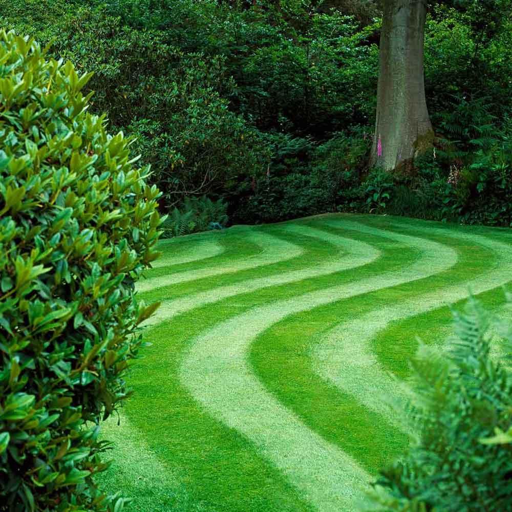Hình ảnh bãi cỏ độc đáo