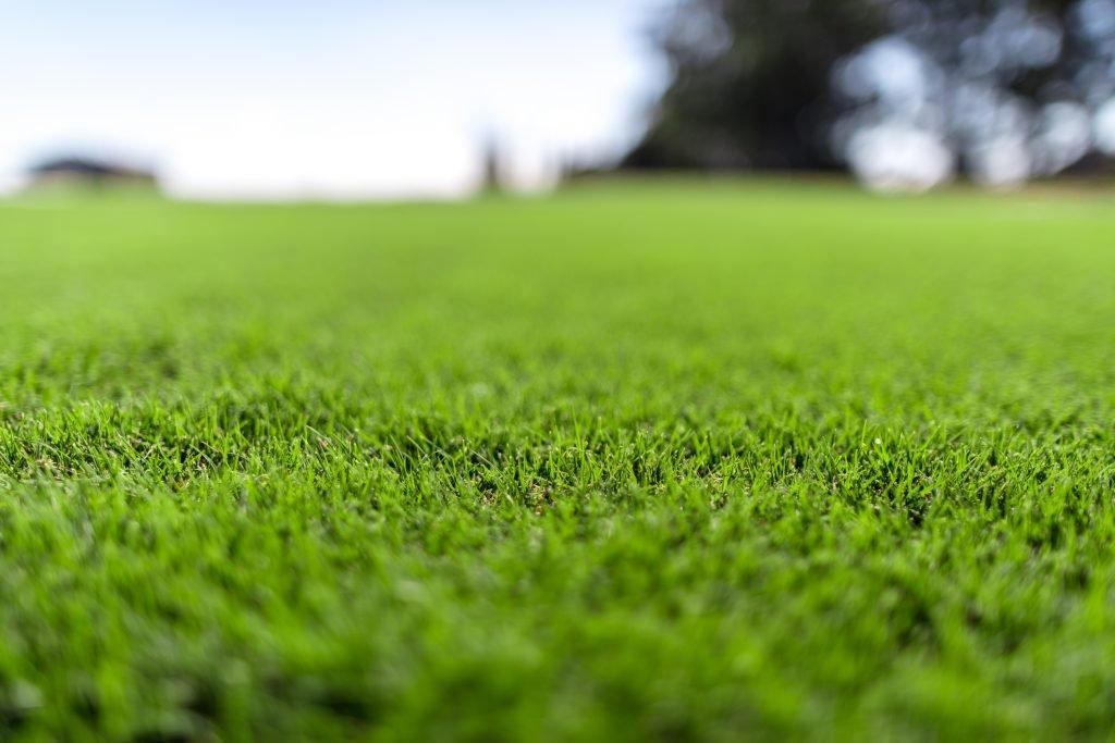 Hình ảnh bãi cỏ Nhật xanh
