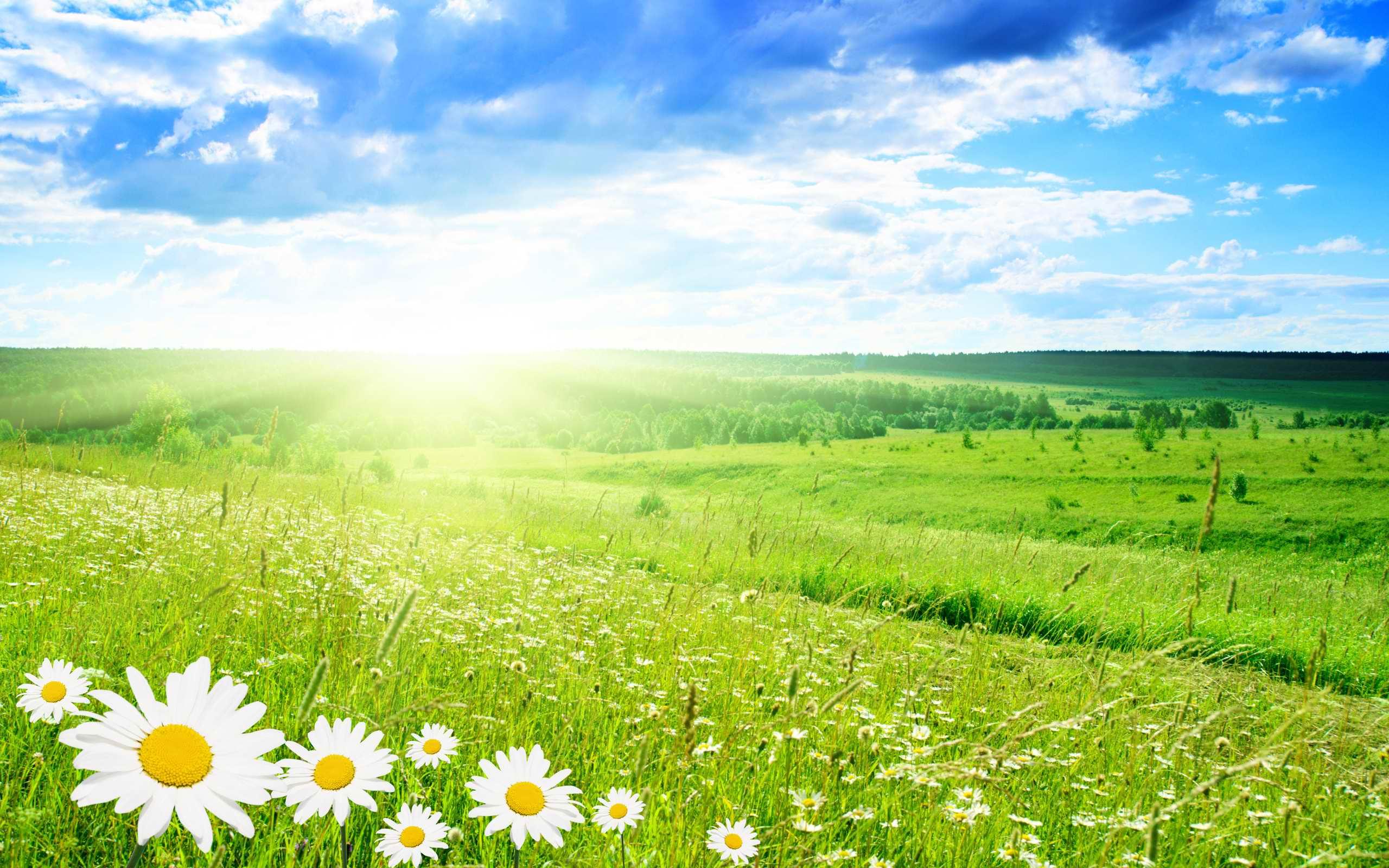 Hình ảnh bãi cỏ xanh đẹp nhất