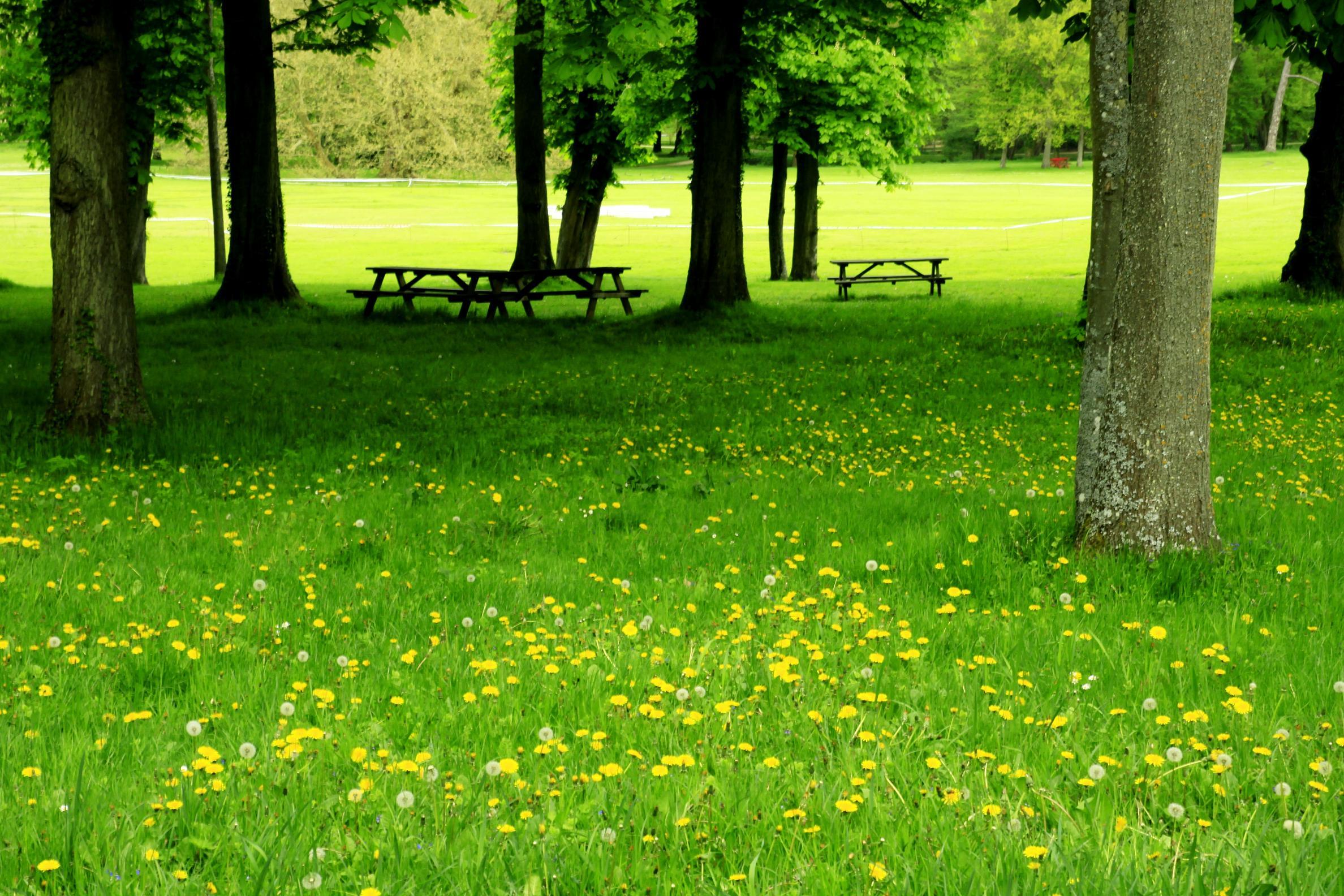 Hình ảnh bãi cỏ xanh hoa vàng