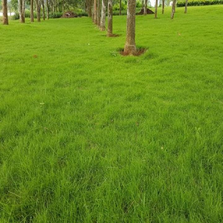 Hình ảnh bãi cỏ xanh non