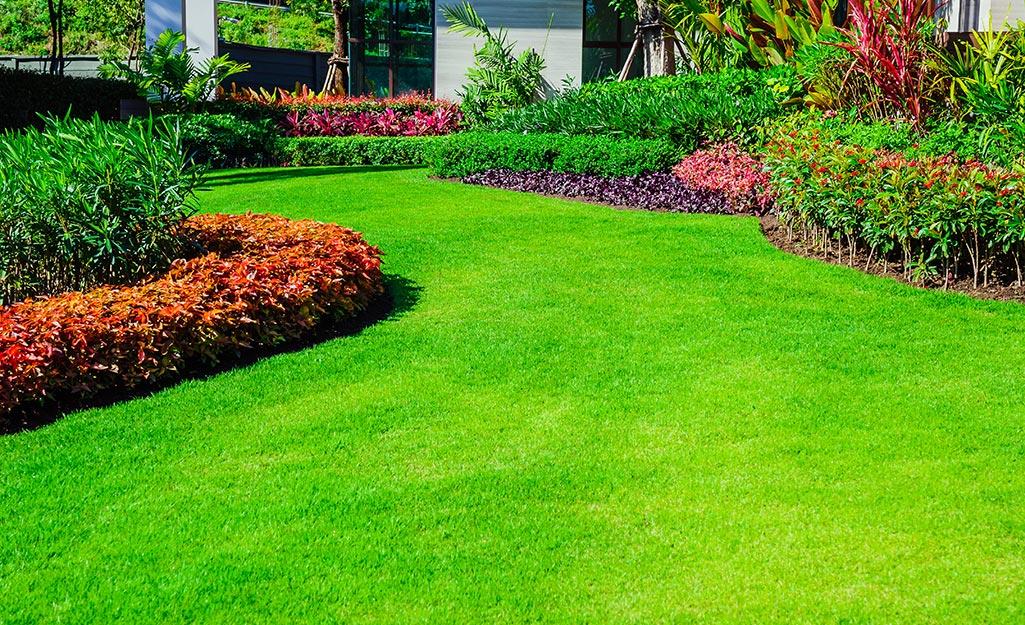 Hình ảnh bãi cỏ xanh trong vườn