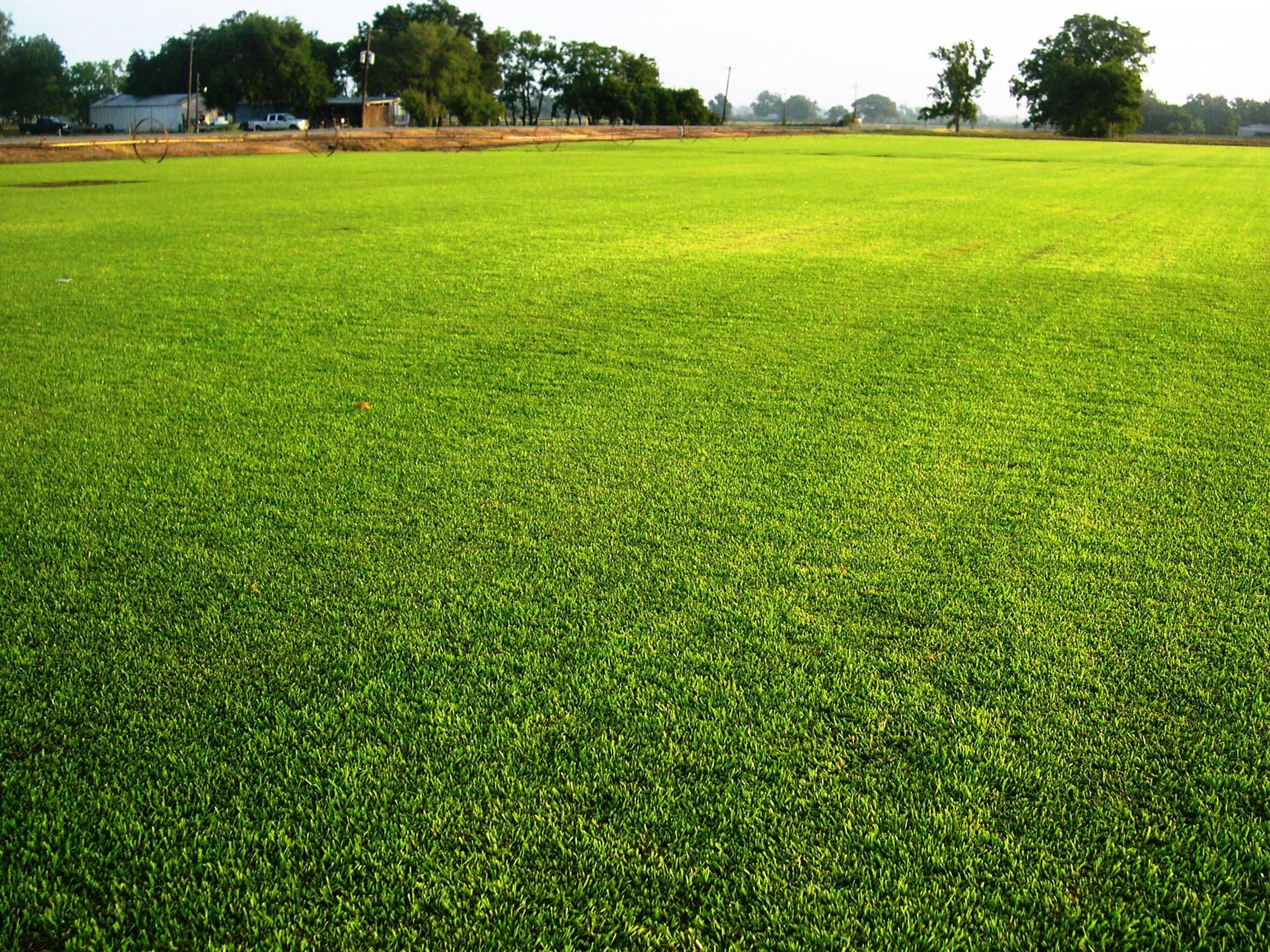 Hình ảnh bãi cỏ xanh tuyệt đẹp