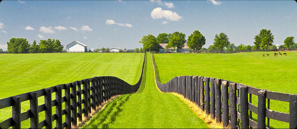Hình ảnh bãi cỏ xanh vô tận
