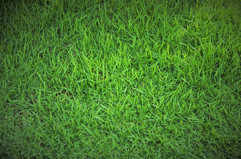 Hình ảnh bãi cỏ xanh