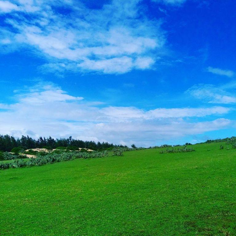 Hình ảnh đồi cỏ xanh