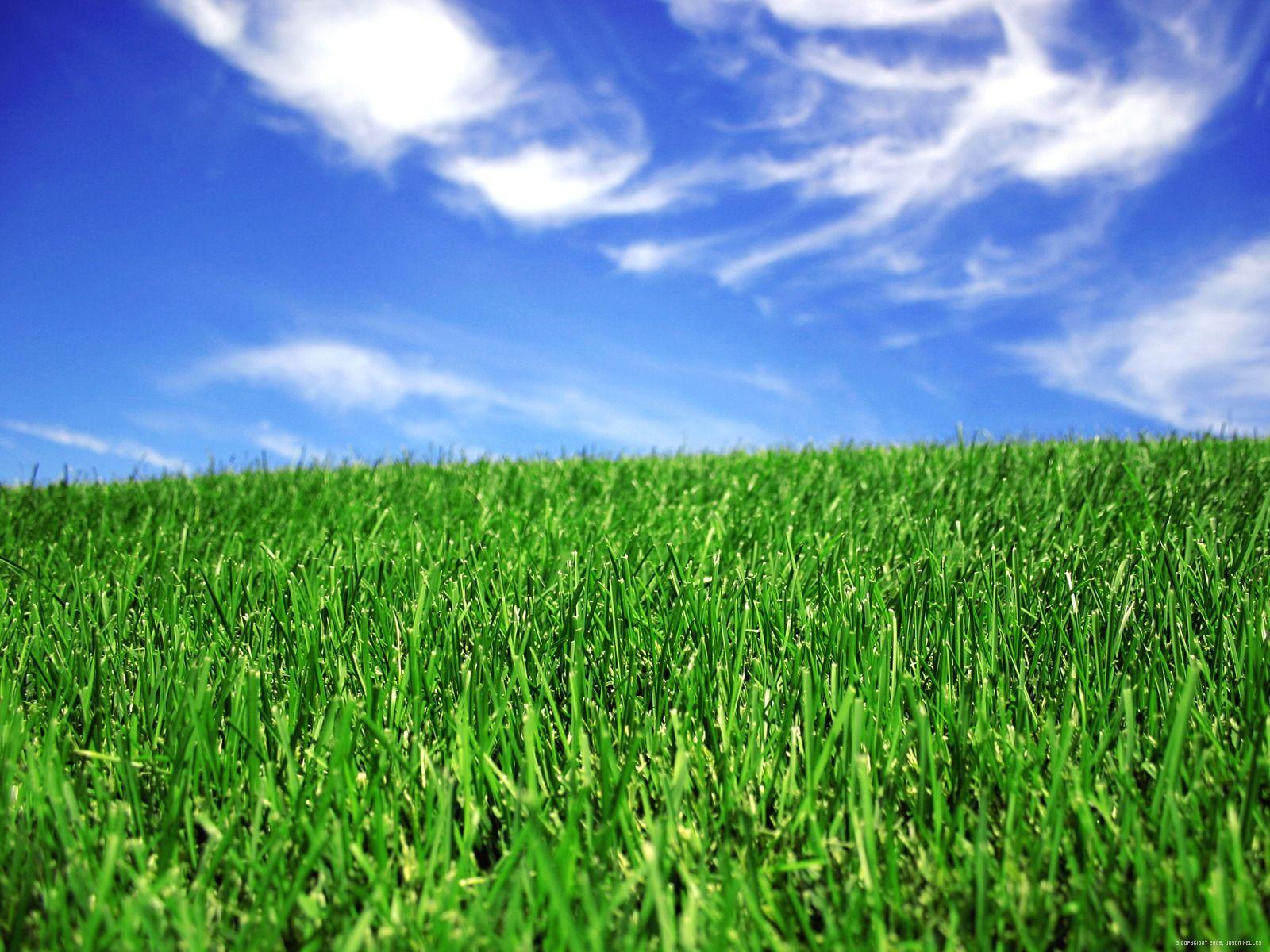 Hình ảnh về bãi cỏ xanh đẹp
