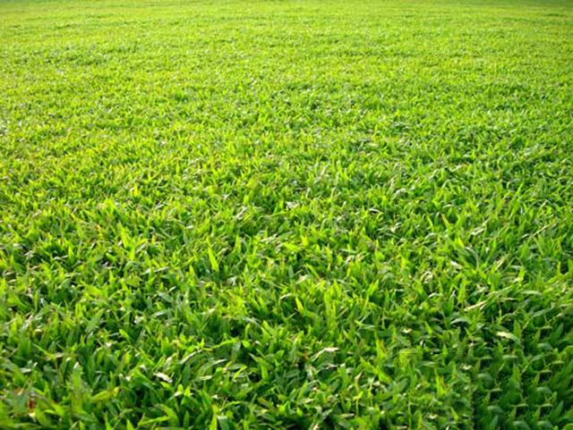 Hình ảnh về bãi cỏ