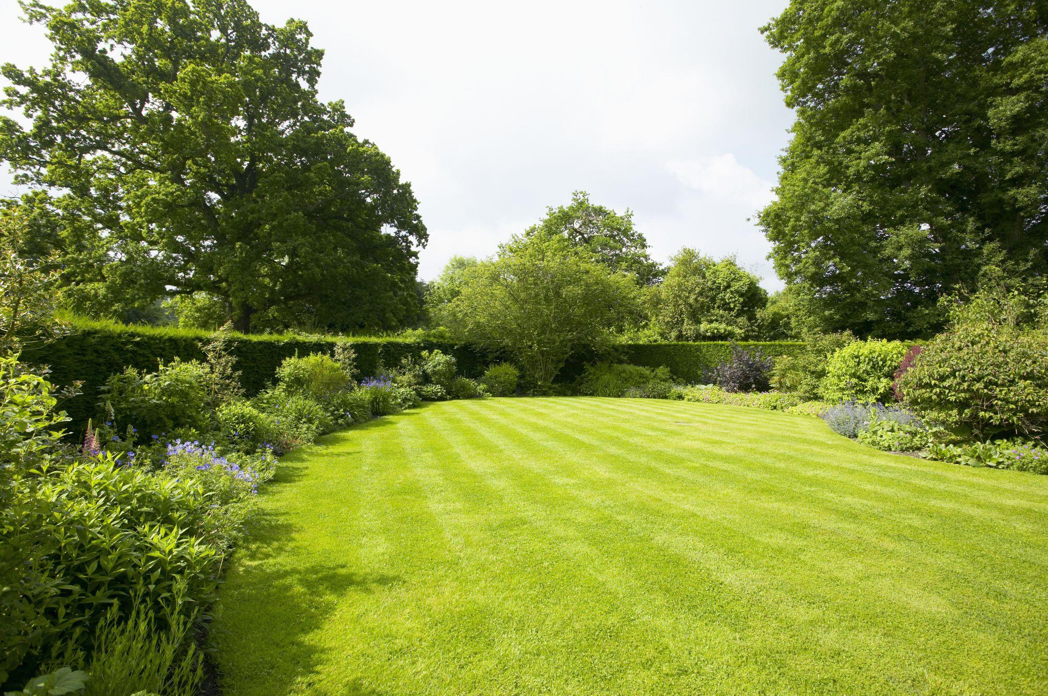 Hình ảnh vườn cỏ xanh đẹp