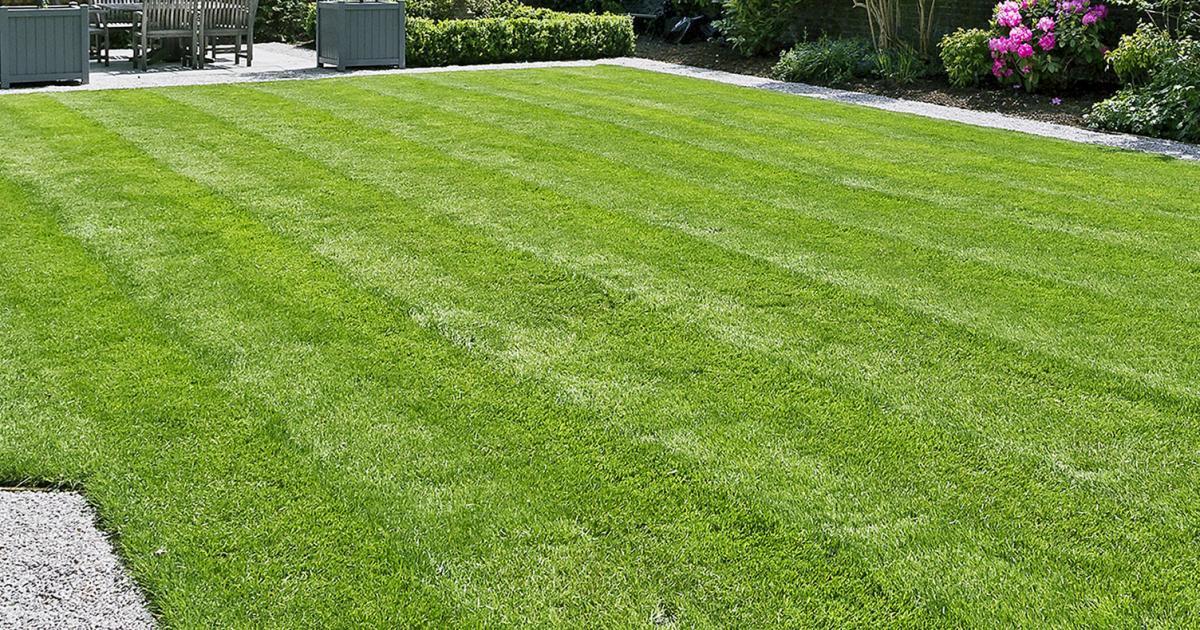 Mẫu sân vườn cỏ xanh