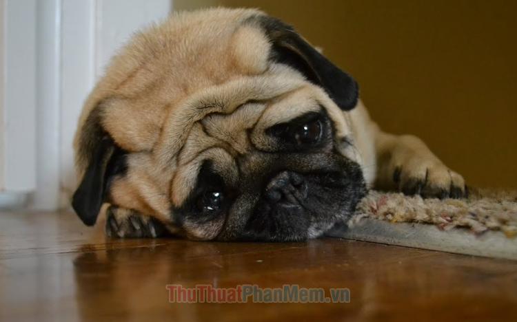 Hình ảnh chú chó buồn đẹp