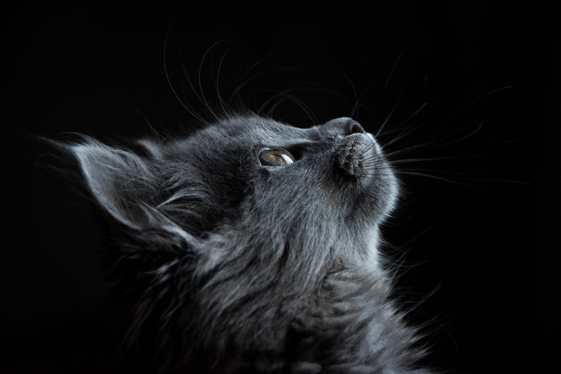Ảnh nền mèo