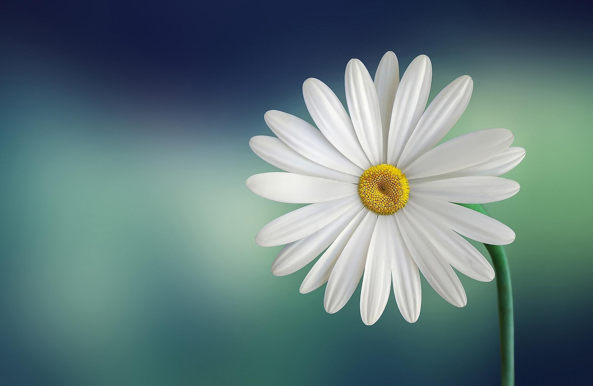 Hình nền hoa đơn giản