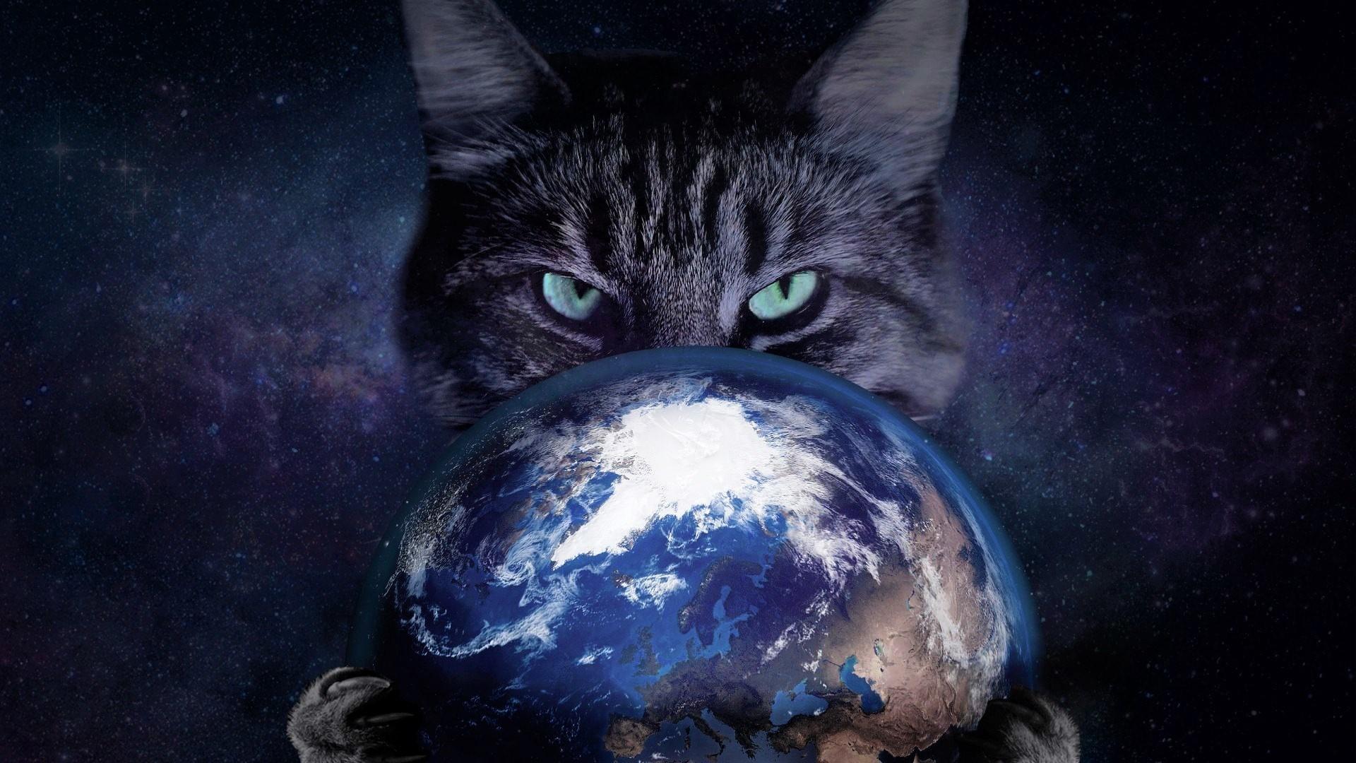 Hình nền mèo và trái đất