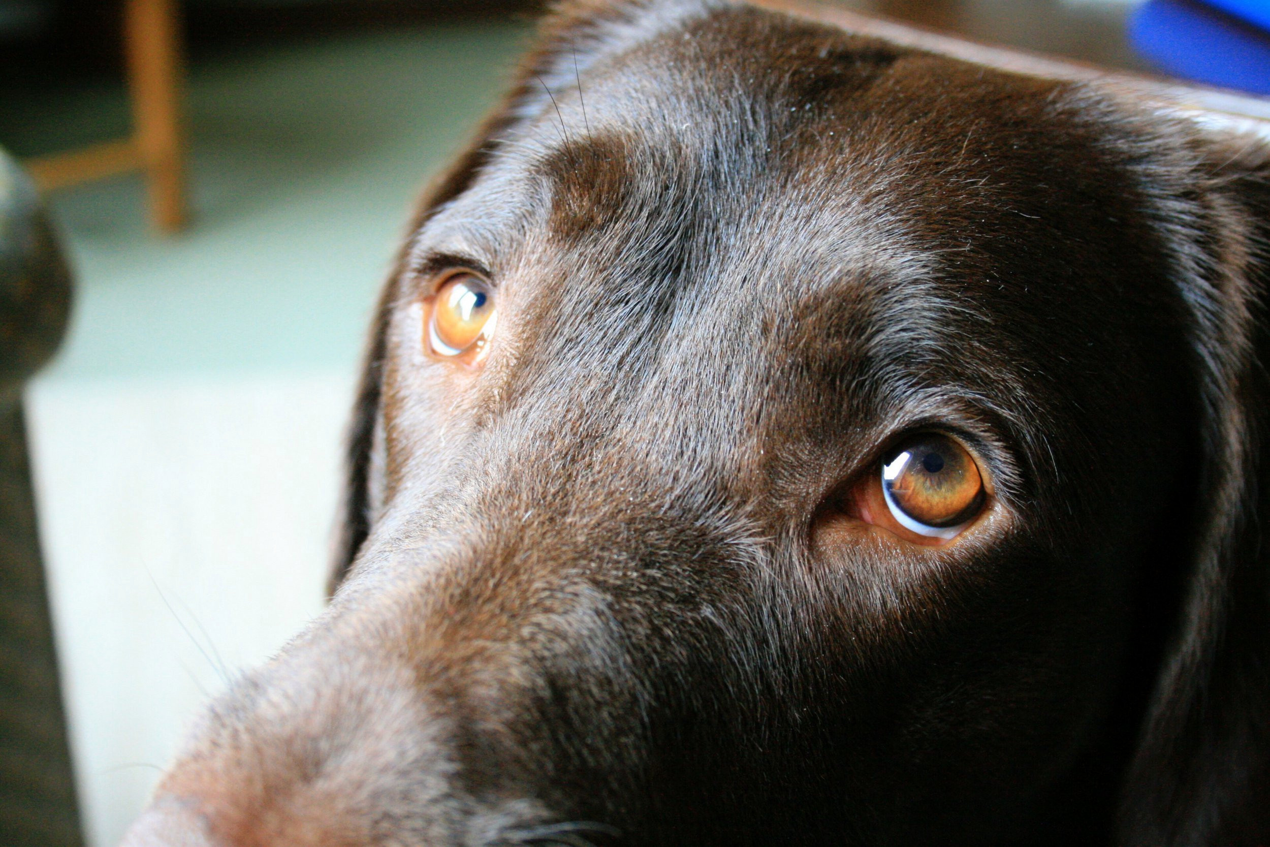 Đôi mắt buồn của chú chó